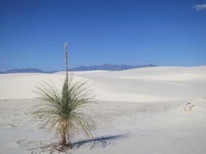 White Sand Dunes of Gypsum